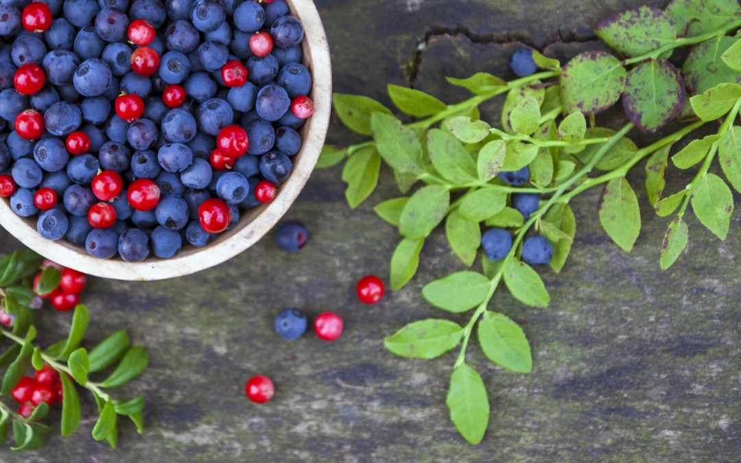 Handpicked Blueberries & Cherries Snack